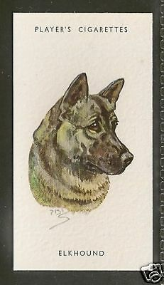 1940 UK Peter Biegel Dog Art Head Study Player Cigarette Card NORWEGIAN ELKHOUND