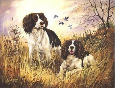 Robert J. May Open Edition Print - English Springer Spaniel 5