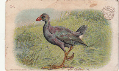 Arm & Hammer Saleratus Soda Church Birds Purple Gallinule Vict Card c1880s