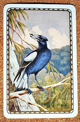 Bird- Magpie -Artist Neville W Cayley -Vintage Single Swap Playing Card