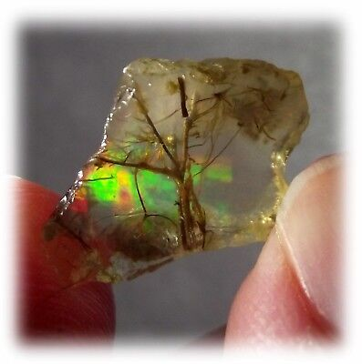 Rare Solid Rainbow Fire Precious Moss Opal Wood Fossil Root Color Play Center