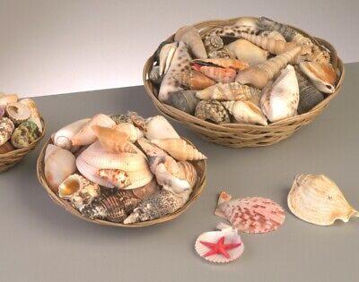 Mixed Shells in Basket - Large | Craft Shells Beach Seaside