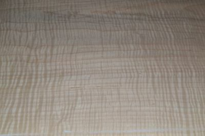 Curly Maple Raw Wood Veneer Sheets 15 x 39 inches 1/42nd  thick          4539-34