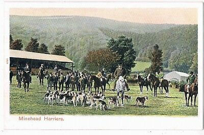 SOMERSET - CPC - HUNTING - THE MINEHEAD HARRIERS, c1910