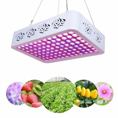 PopularGrow Upgrade 300w LED Wachsen Licht 2 IN 1 chips Ture 3w Pflanzen Lampe
