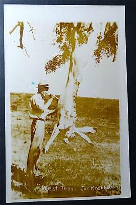 Postcard RPPC Real Photo Exaggerated West Texas Jack Rabbit