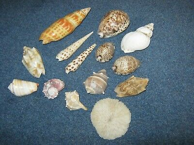Job Lot Collection Of Old Sea Shells.