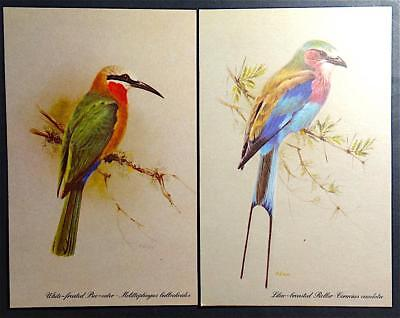 2 Postcards Artist Signed Rena Fennessy Birds by Kenya Litho Very Colorful