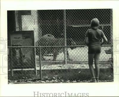 1982 Press Photo Visitor Views Tigers at the Waco Zoo in Texas - hca58406