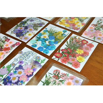Pressed Dried Flowers Plant Herbarium Kid DIY Art Craft Scrapbook Handmade Gift