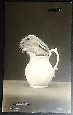 Postcard RPPC Rotograph Series 1906 Caught Bunny Rabbit in White Pitcher