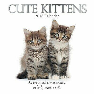 Cute Kittens 16-Month 2018 Square Wall Calendar Book The Fast Free Shipping