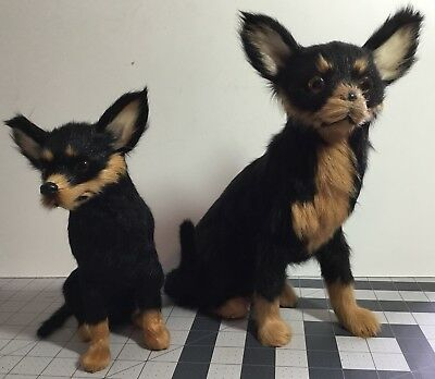 Life Like Chihuahua Dogs (2) Made With Goat Fur Resin Eyes Life Size Realistic