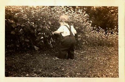 Old Antique Vintage Photograph Little Baby Back to Camera Facing Bushes