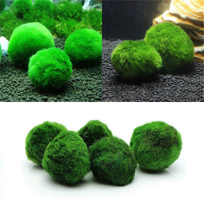 Marimo Moss Ball Cladophora Live Aquarium Plant Fish Tank Aquarium Ornament US