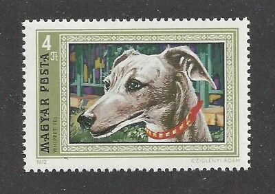 Dog Art Head Study Portrait Postage Stamp WHIPPET 1972 Hungary MNH