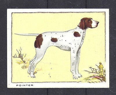1934 UK Dog Art Portrait Gallaher Cigarette Large Trade Card ENGLISH POINTER