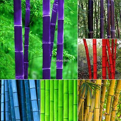 New Potted Plant Bonsai of Garden Plants Bamboo Seeds 10-20-50-100Pcs