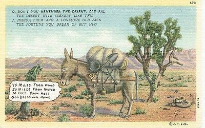 Vintage Postcard - O, Don't You Remember The Desert - Donkey - 1940's