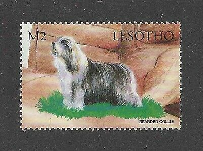Dog Art Full Body Portrait Postage Stamp BEARDED COLLIE Lesotho Africa MNH