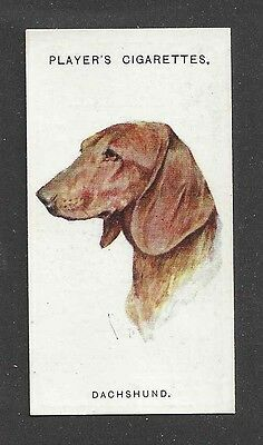 1929 UK Arthur Wardle Art Dog Portrait Player Cigarette Card SMOOTH DACHSHUND