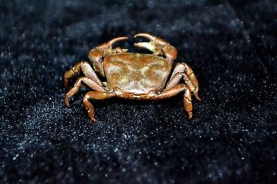 Collectible Rare Ancient old Copper Chinese Handwork lifelike Crab little Statue