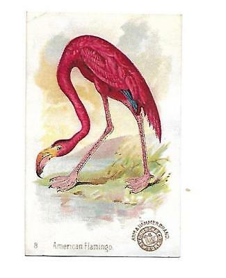 Arm & Hammer Saleratus Soda AMERICAN FLAMINGO Vict Card 1880s