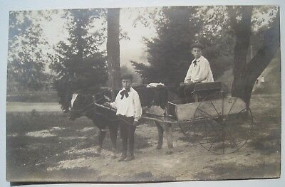 Two Boys, Calf & 2-wheel Wagon Old Real Photo Postcard; No ID; AZO