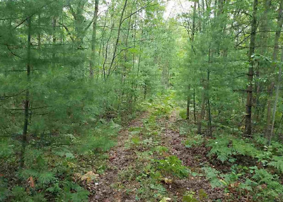 Live On An Island, Full Warranty Deed, No Reserve, Residential Vacant Wooded Lot