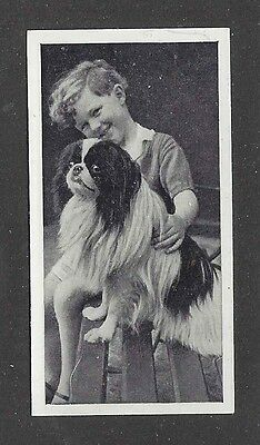 1936 UK Dog & Friend Child Photo Carreras Cigarette Card JAPANESE CHIN SPANIEL