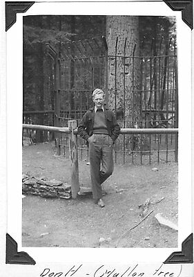 Vintage Photograph 1940 Historic Mullan Tree Idaho Forestery Worker Old Photo