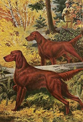 Irish Setter - Vintage Color Dog Print - MATTED