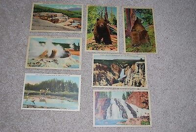 Postcards;vintage collectible Yellowstone National Park