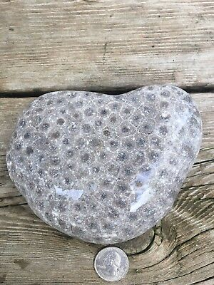 Unpolished Heart Shaped Michigan Petoskey Stone- 1.6 Pounds - Fossil Coral