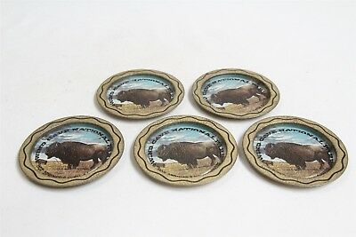 Retro Wind Cave National Park South Dakota 5 Tin Buffalo Coasters Eames Era