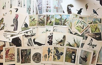 lot of 1001 Amazing vintage Bird print Original beautiful art print lithographs