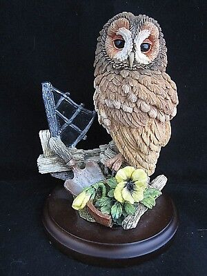 Country Artists Tawny Owl With Broken Window