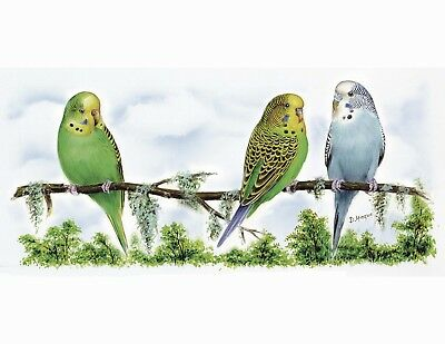 "Parakeet Bird Wrap Wraparound 1 pc 7-1/4"" X 3-1/4"" Waterslide Ceramic Decal Bx"