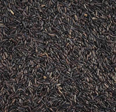 Wildlife Kingdom Niger Seed Best Quality High Energy Wild Bird Food Finch Feed
