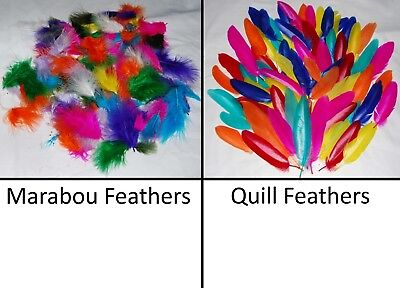 Coloured Feather - Choice of Type & Colours - Kids Craft Scrapbooking