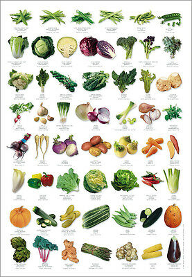 Vegetable Identification Poster in English, French...