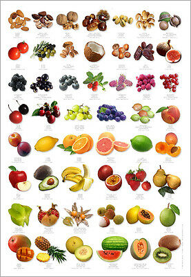 Fruit Identification Poster in English, French, German