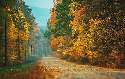 Digital Picture Image Photo Wallpaper JPG Autumn Road Moldova