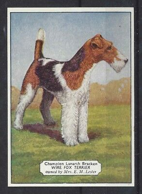 1938 UK Dog Art Photo Hand Colored Ardath Cigarette Card Ch WIRE FOX TERRIER
