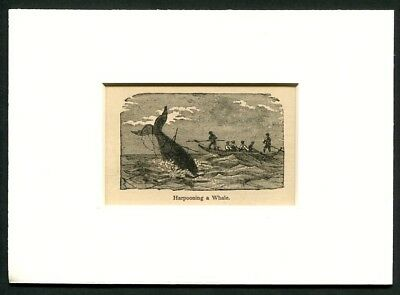 1886 Antique Print - Whaling Boat - Harpooning a Whale