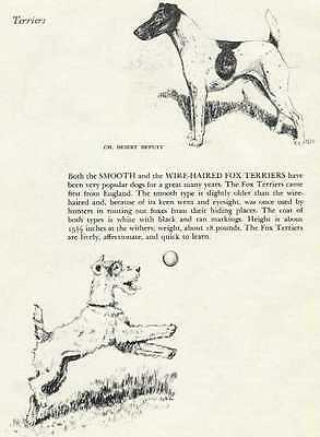 Smooth / Wire Fox Terrier - 1945 Vintage Dog Print - G. Cook