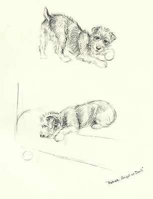 Wire Fox Terrier P - Vintage Dog Print - 1948 KF Barker