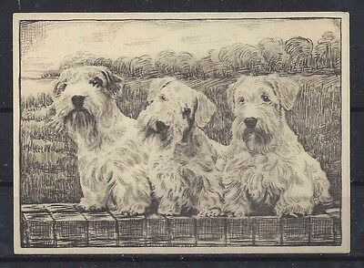 1938 UK Dog Art Etching Ardath Large Cigarette Trade Card SEALYHAM TERRIER VG+