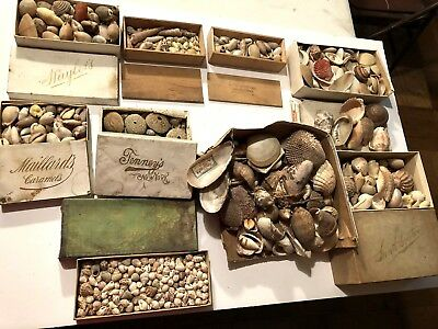 1860-90 SEASHELL COLLECTION Sea Shells Cape Elizabeth Maine NE Coast EM Cathcart