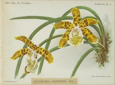Print Plate from 'Dictionnaire Iconographique des Orchidees' - Scuticaria Hadwen